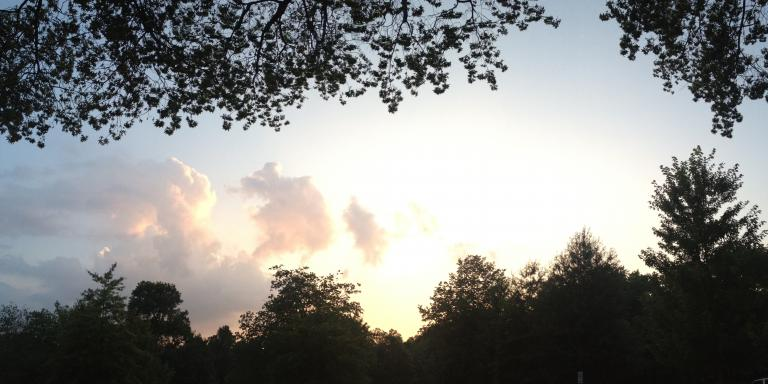 Trees and sky at twilight